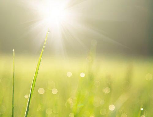 Novena į Šventąją Dvasią: 7 diena